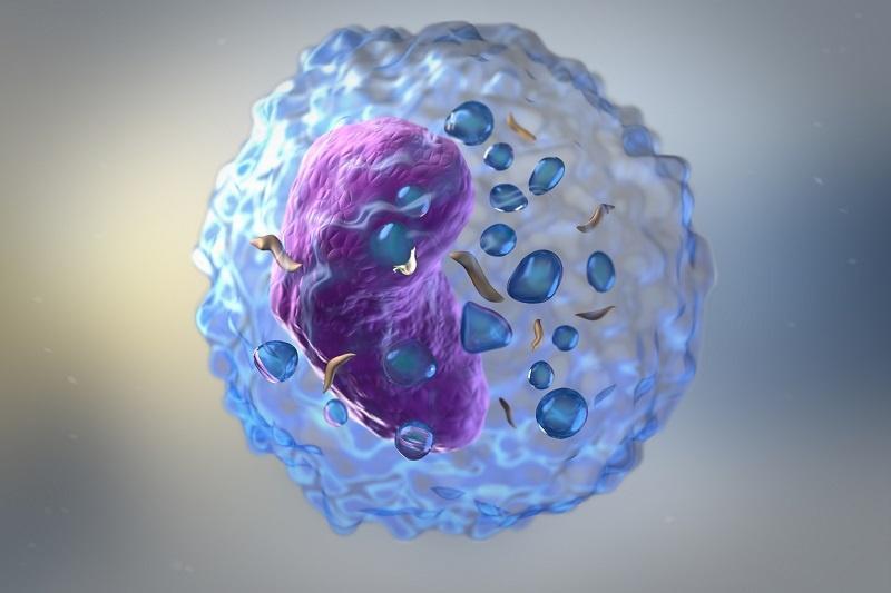 W jaki celu dokonuje się oceny subpopulacji limfocytów?